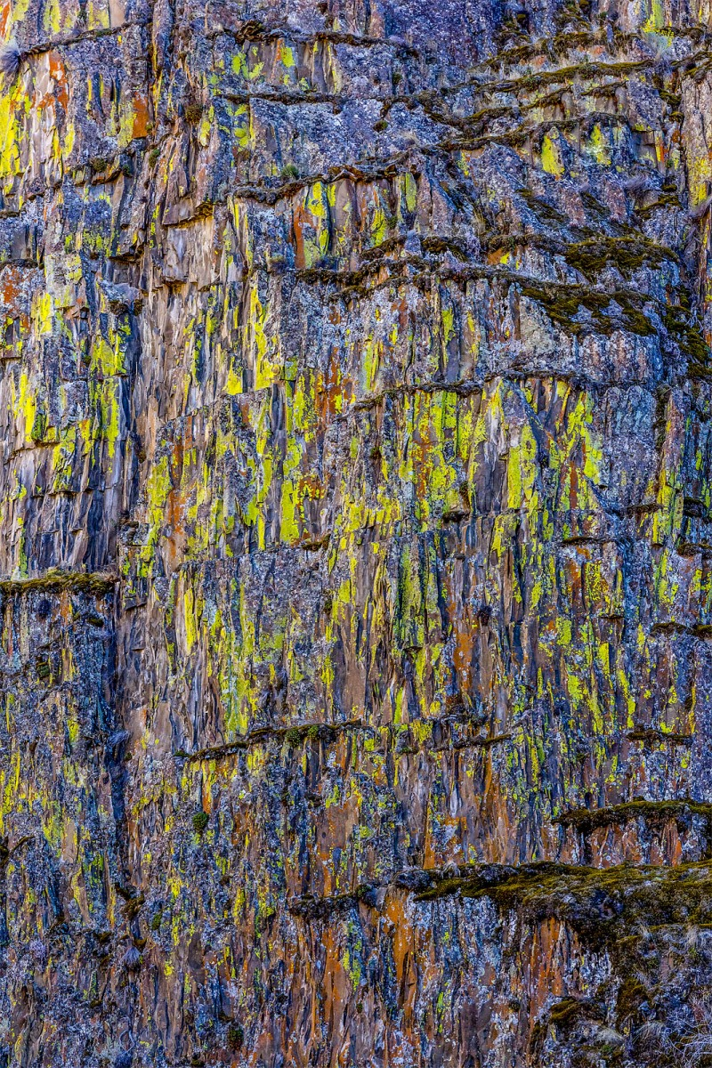 Lichens-v3-crop-