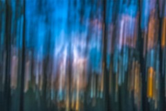 Abstract Forest Oregon Dusk MG_2857 v2b