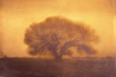 BSFAimages Manipulated Prints Owens Valley Oak