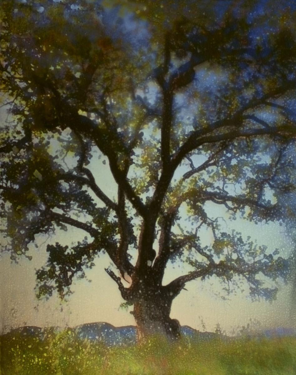 Oak_v2_