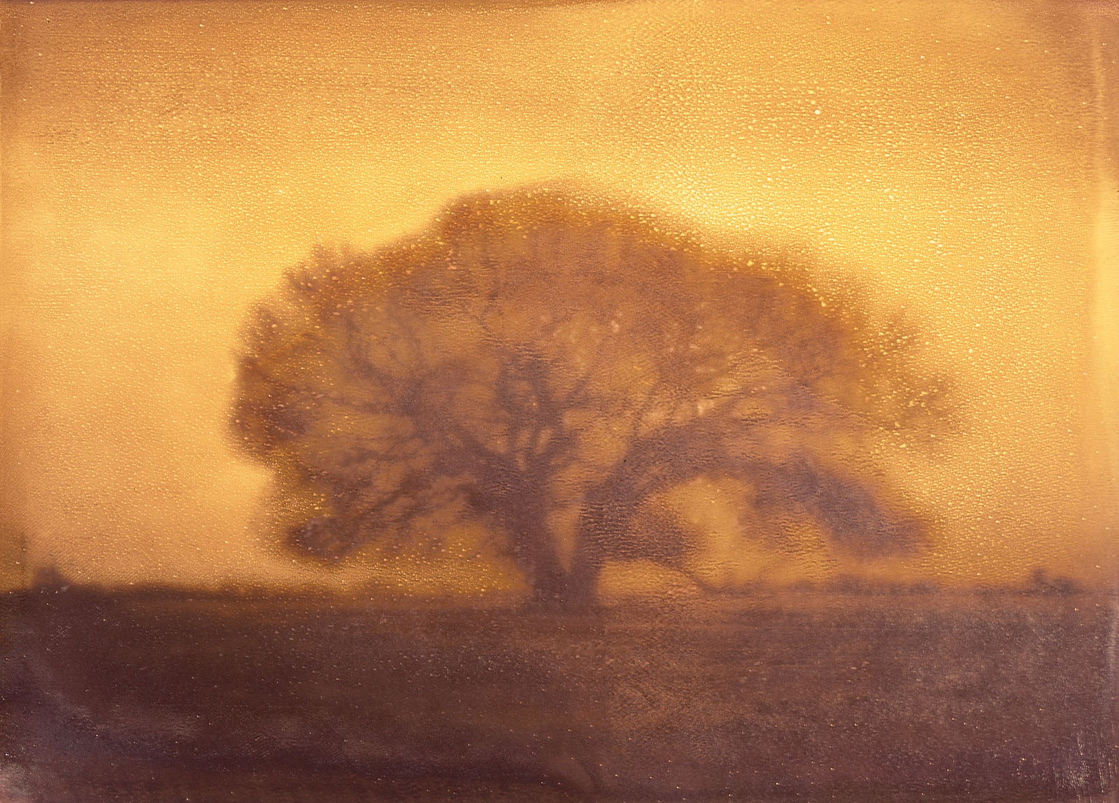 Owens_Valley_Oak_Horiz_
