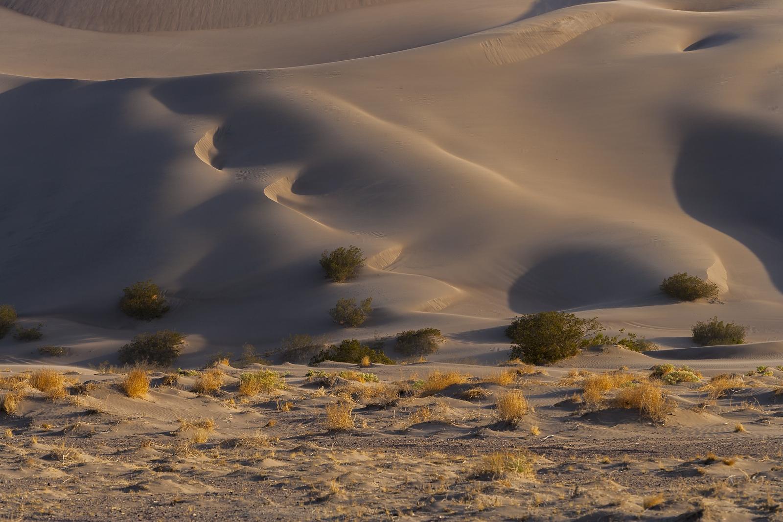Nevada Scenic Landscape Q4G9492_ Big Dune Vcnty Amargosa Valley