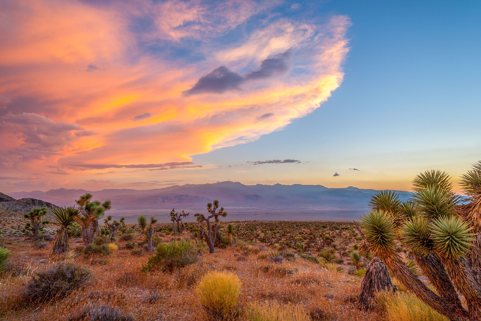 Nevada Scenic Landscape Vista  Q4G6225 v2b