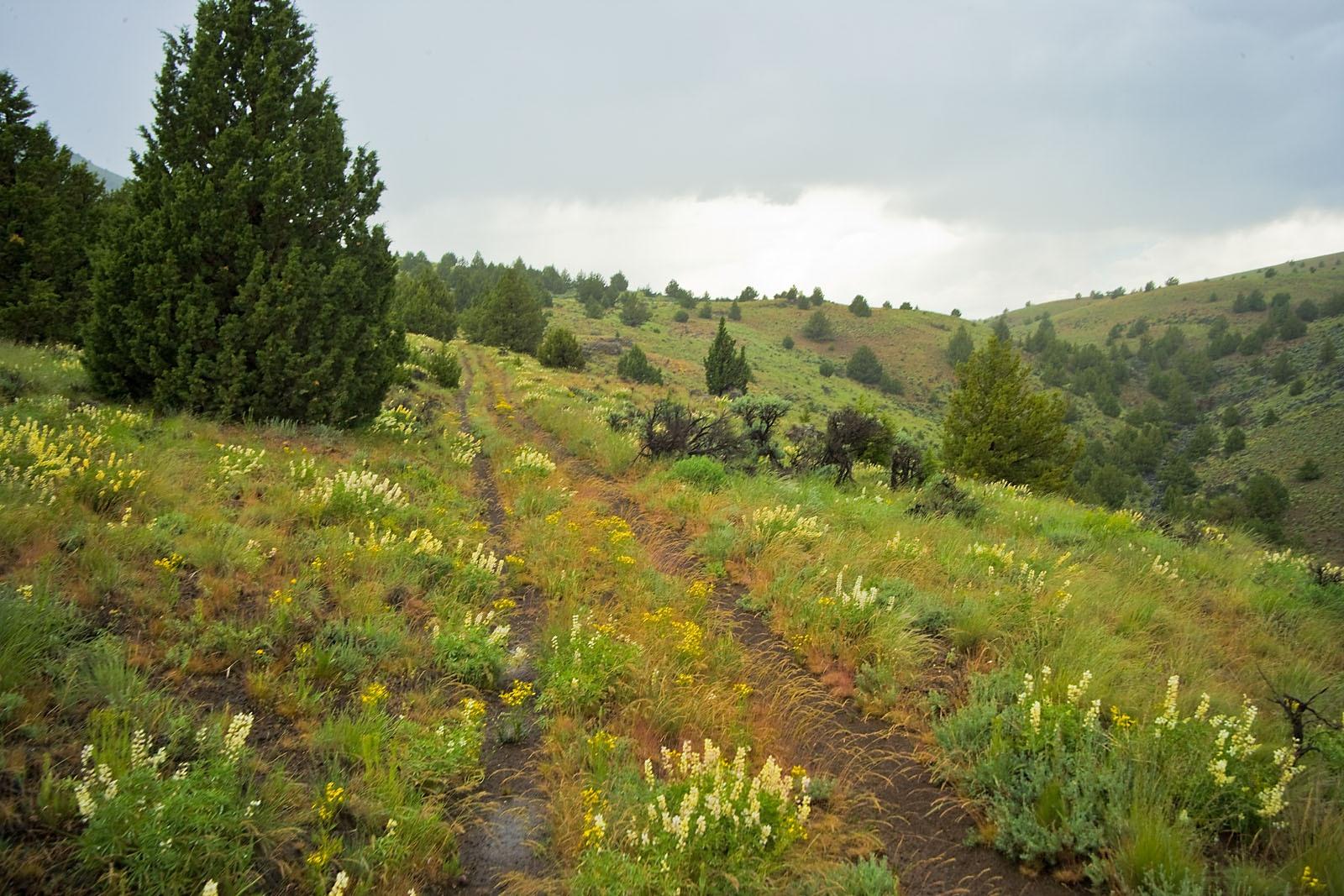 Bassett Scenic Landscape Vistas VQ4G3012